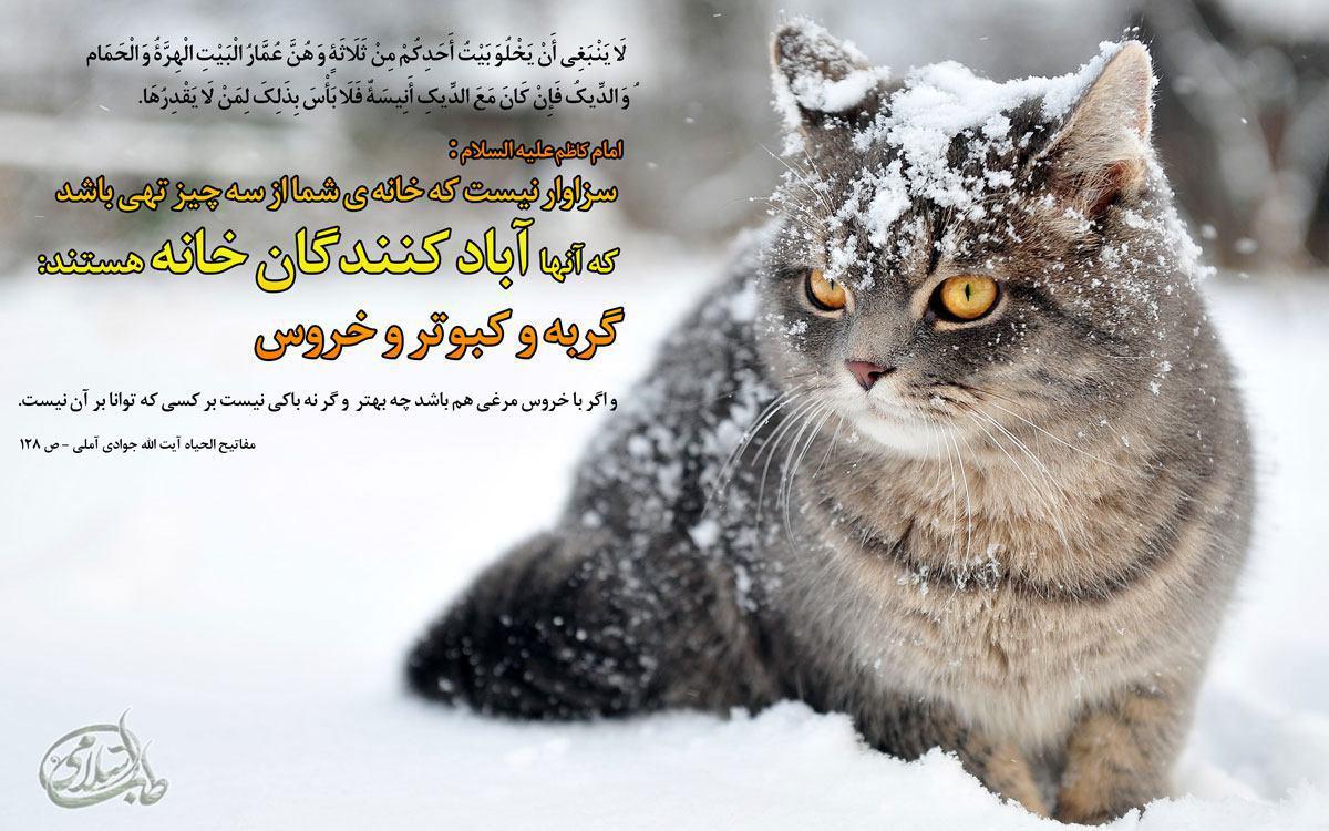 نتیجه تصویری برای گربه