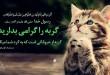 نگه-داری-گربه-طب-اسلامی (5)